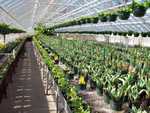 Greenhouses - Elizabeth Park